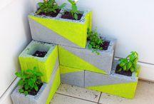 plantatie legume