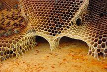usine à miel