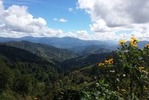 Trees and Mountains of Benguet / Trees and Mountains of Cordillera Region
