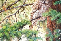 Wildlife art and images