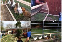 Høner å sånt