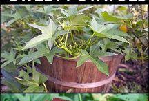 Planteverdenen