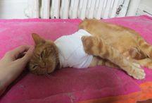 Soutien pour les animaux / Les refuges sont saturés, la fourrière euthanasie. Il faut que ça cesse!