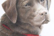 coloured pencil drawings / by Mary Campbell