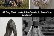Poze amuzante cu animale