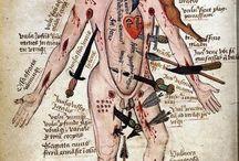 Læge/kirurg