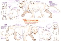 Sample【Animal Anatomy】