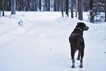Dogs / by Kristin Flynn