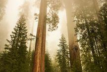 California National Park