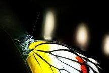 Butterfly / #wild