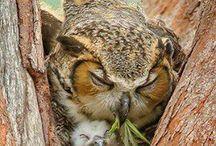 sleeping animals <3