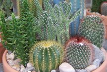 Cactus and succulents / Pictures of all kind of cactus and succulents