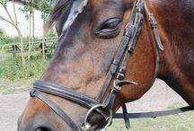Junko Watanuki - Horse flexibility and horse training