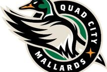 Your QC Mallards / Follow this board for upcoming games and promotions.  The Quad City Mallards - It's Your Team!