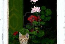 gatitos en la ventana