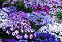 flores e jardins