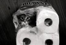 Cat Lady <3 / by Kimmy Alvarez