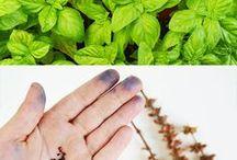 semini da orto