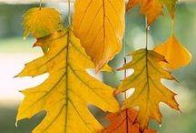 dekoracje sali jesień