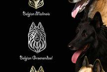 Honden/Dogs