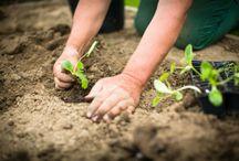 #Gardening & #Outdoors / by ConsumerAffairs