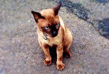 my cat named dexter