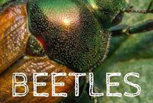 Garden pest prevention & control