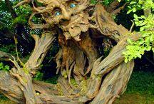 Bizarre bomen