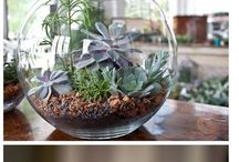 plants: container ideas