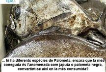Palometa / Palometa / Aquí trobaràs curiositats sobre la palometa / Aquí encontrarás curiosidades sobre la palometa