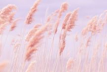 Pantone Colour of the Year 2016 - Rose Quartz and Serenity