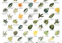 азбука растений