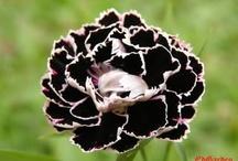 Black & White Garden Ideas / by Anna Martin
