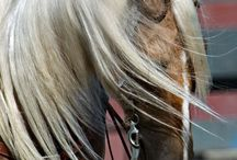 All things Horse / by Mary Fleshman
