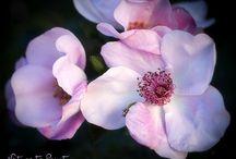 Blumen fotografieren | Blumenfotografie | Flower Photography / Tipps und kostenlose Tutorials Blumen und Natur besser fotografieren.