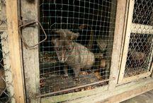 Cruel Captivity