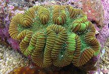 Marine Life / Always something amazing to see under the beautiful ocean.