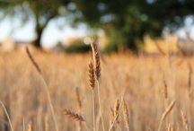 HEIRLOOM | grains