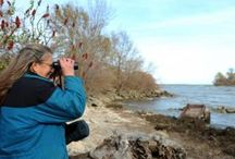 LEIC BSC In the News / News items about Lake Erie Islands Chapter of the Black Swamp Conservancy
