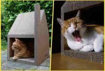 для котиков