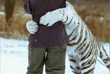 Human and animal love / The beautiful love between animals and humans