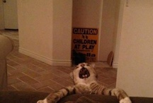 Cats are Clowns