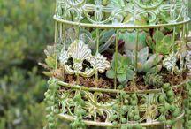 succulents♡