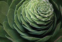 succulentpict