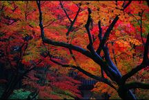 Autumn in Japan / Momiji