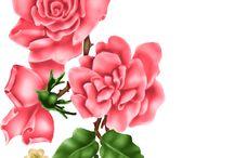 Розы и не только