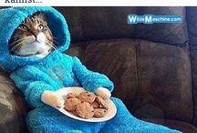 süße Katzen:3