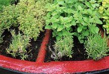 Byliny / herbs