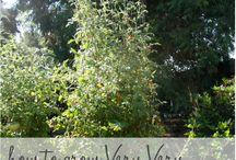 Best of: A Sonoma Garden