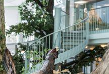 Neuer Naturbereich / Umgestaltung des Naturkundlichen Bereichs im Landesmuseum Niederösterreich